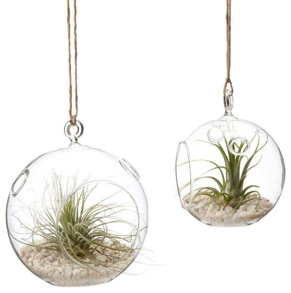 hanging-terrariums