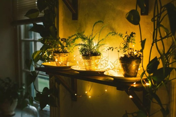 plants with fairy lights