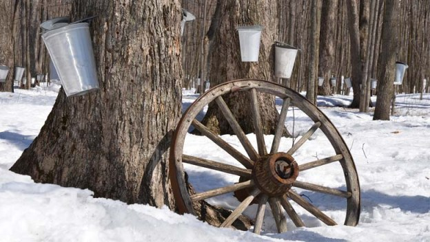 Maple syrup season in full boil across Lanark County