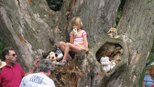 Young girl sitting in a tree at the Stewart Park Festival.