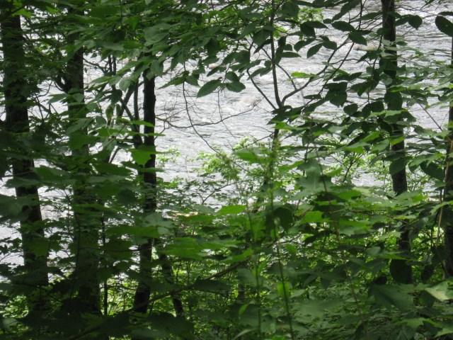 Sacandaga River rapids