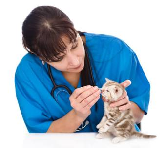 Anual pet health check in london