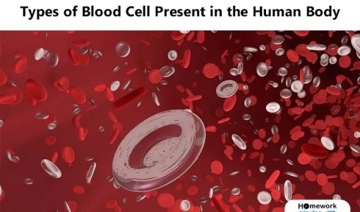 Types of Blood Cell Present in the Human Body