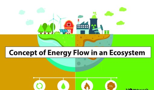 Concept of Energy Flow in an Ecosystem