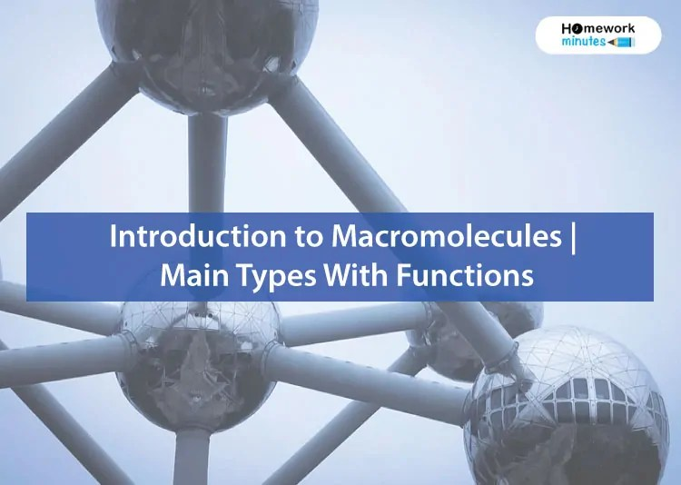 Introduction-to-Macromolecules--Main-Types-With-Functions