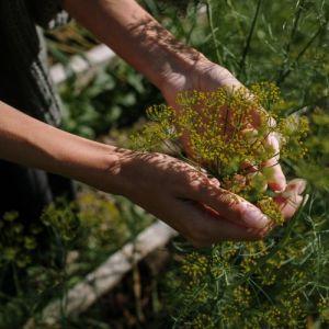 Un plaisir simple, toucher avec délicatesse des fleurs jaunes