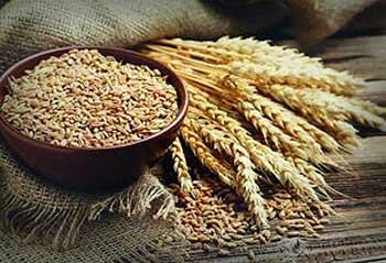 Características del trigo