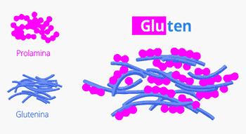 Proteína del glúten