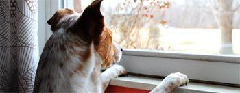 Tiempo dedicado a las mascotas