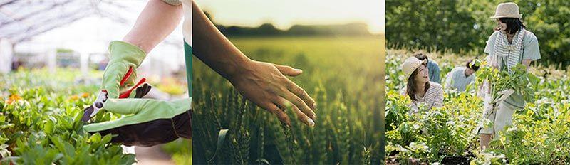 Salidas profesionales agricultura ecológica