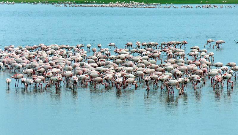 Flamencos Lago Nakuru