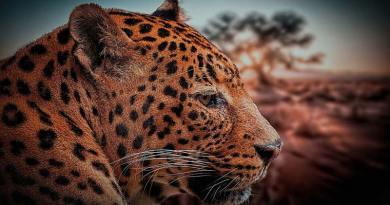 Safaris en Kenia