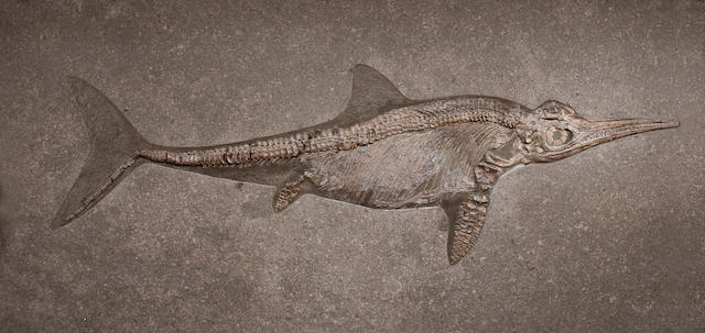 ¡Mary Anning desenterró el esqueleto de un ictiosaurio!