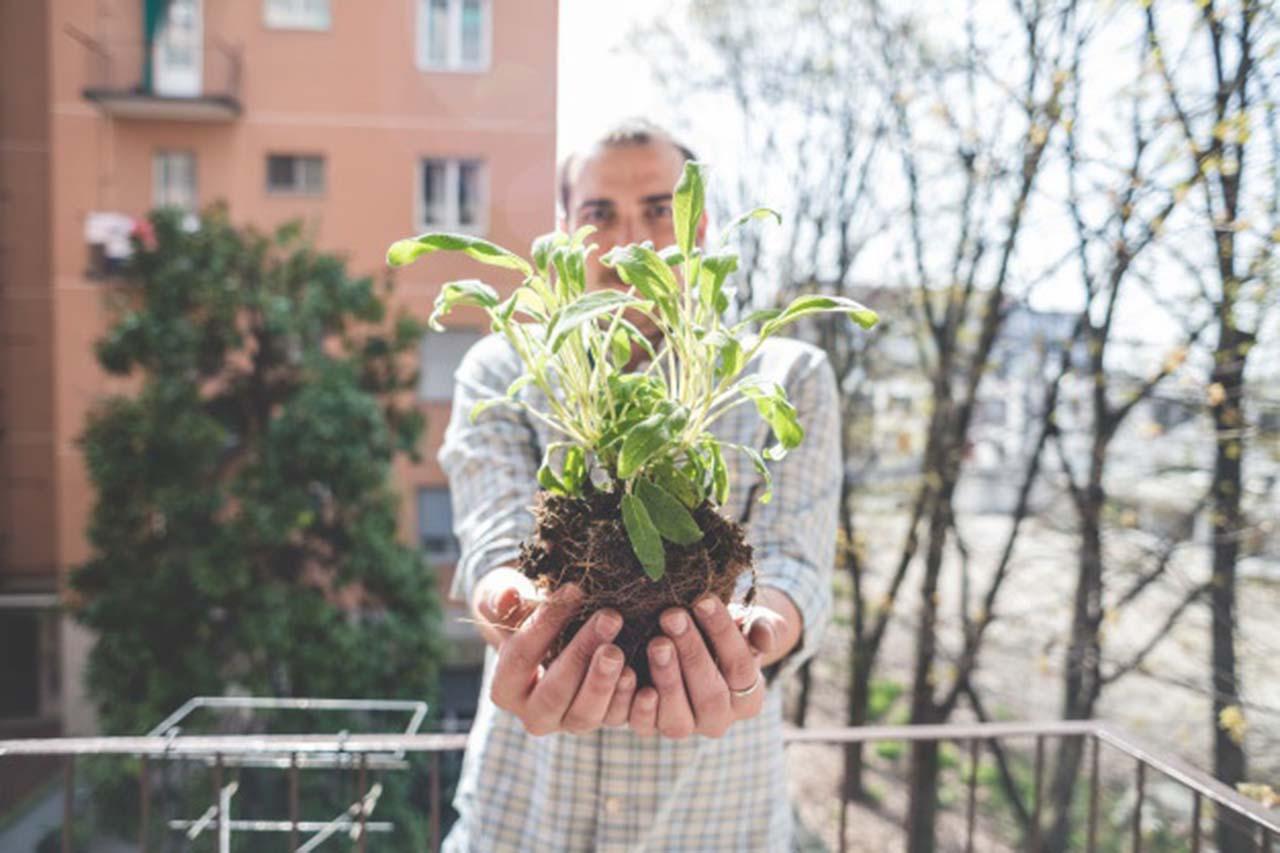 Estas especies de plantas no se te van a morir y serán tus favoritas si eres descuidado.