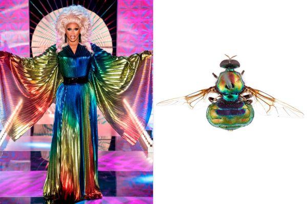 opaluma rupaul insecto mosca