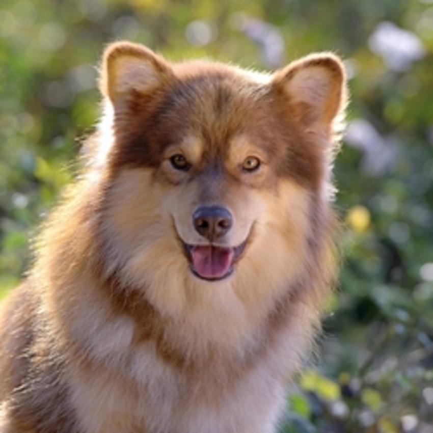 Pup Uit Buitenland HondenForum