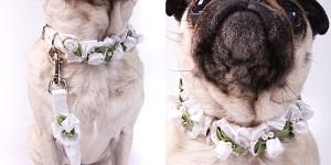 bruiloft halsband hond 300x150 Je hond bij je huwelijk