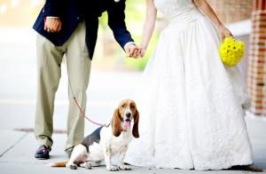 hond bij bruiloft 300x196 Je hond bij je huwelijk