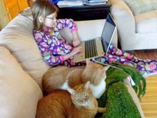 Kitties helping with homework #shop