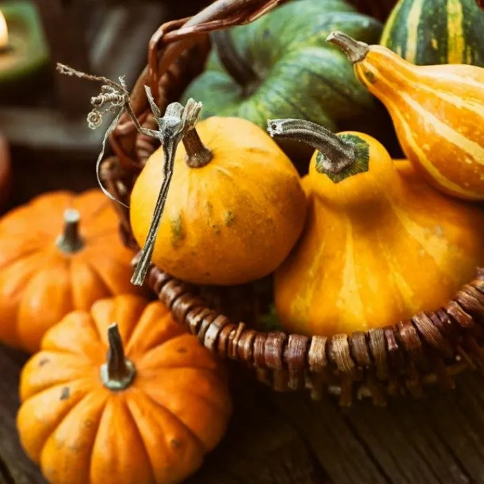 Celebrate Thanksgiving with these 14 easy steps toward a more sustainable, zero waste holiday celebration. Check them out now!