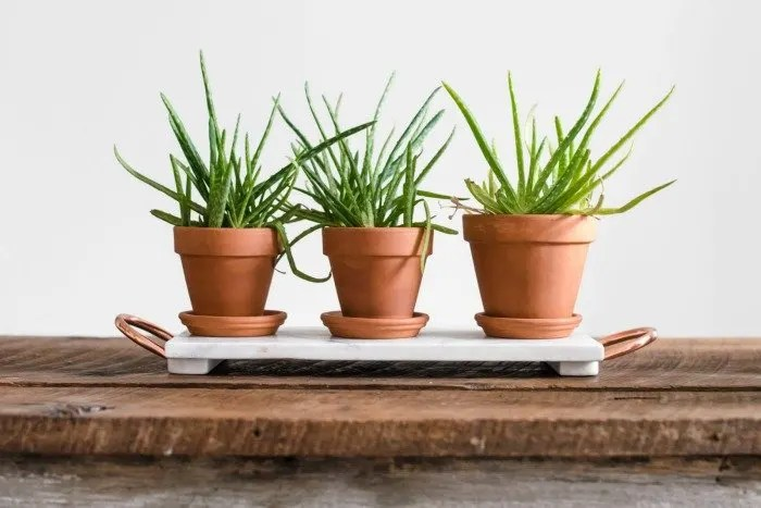 5 Great Health Benefits of Having Houseplants
