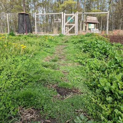 Our Honest Garden Grows: 5 Things I Learned In My First Gardening Class