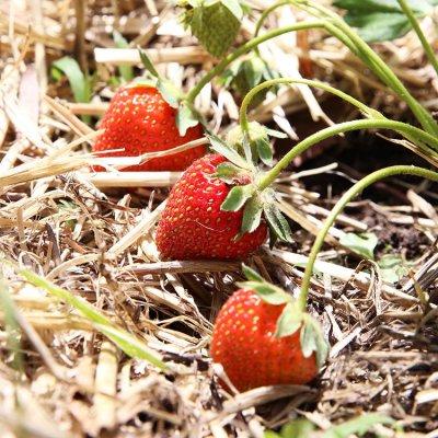 How We Employ Regenerative Practices In Our Home Garden