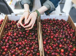 Cherry season at the farmers market. #cherries #eatlocal www.honestlynourished.com