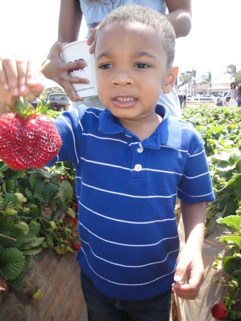 Boy strawberry picking in Carlsbad, CA