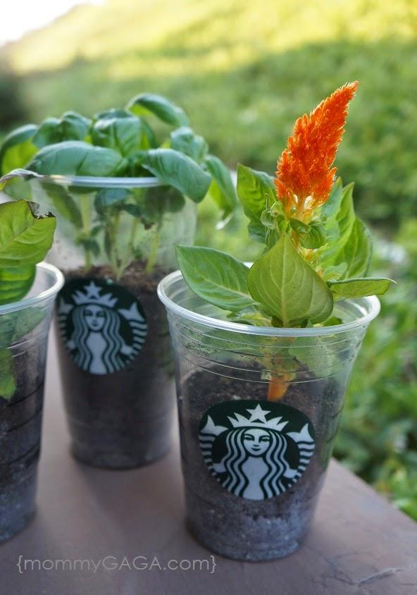 DIY Repurposed Starbucks Cup Planters