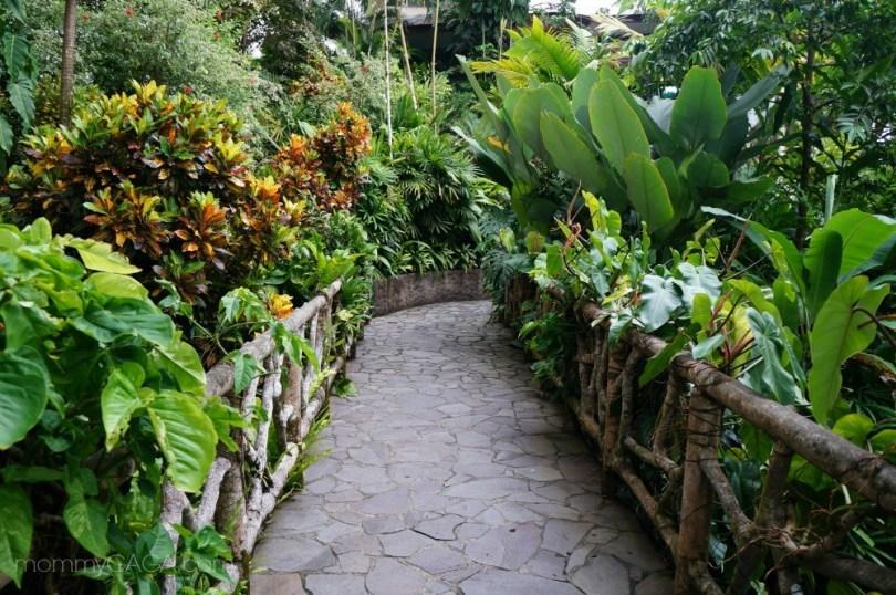 Lush green bridge at Hotel Si Como No, Costa Rica