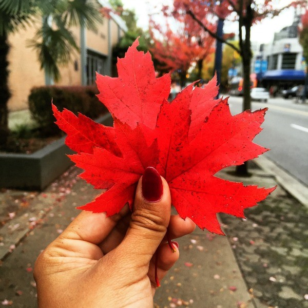 Interesting things I saw in Vancouver BC, Canada, Red autumn maple leaves
