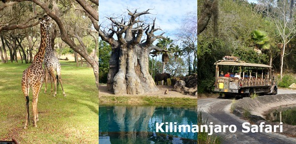 Disney's Animal Kingdom Theme Park, Kilimanjaro Safari Savanna Tour