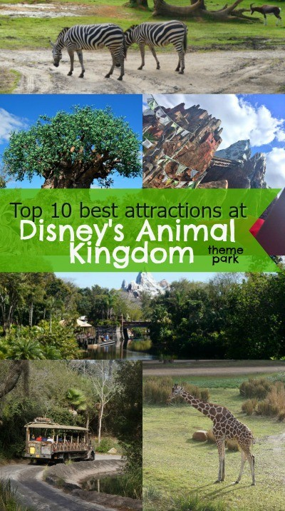 Top 10 Best attractions at Disney's Animal Kingdom theme park - we love the Expedition Everest roller coaster and the Kilimanjaro Safari!