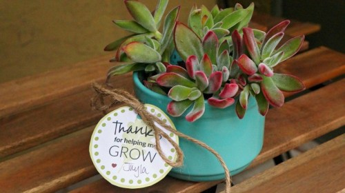 Succulent in a mug DIY teachers gift, thanks for helping me grow!