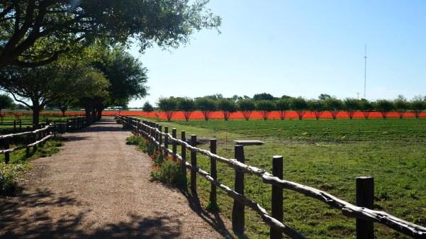 Wildseed Farms in Fredricksburg, TX