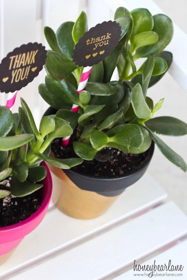 succulents teacher gifts