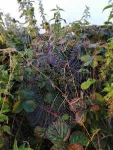 The web of the Orb Spider