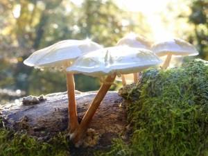 Treasures from the kingdom of fungi