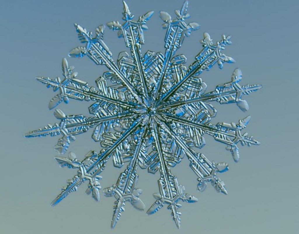Beauty in snowflakes