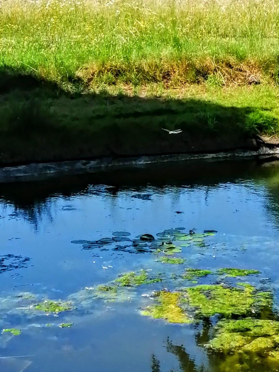 Forgotten landscapes field ponds
