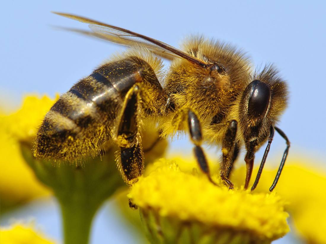 Bees 101 Honey Bee Haven