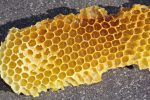 Do honey bees move eggs from cell to cell?