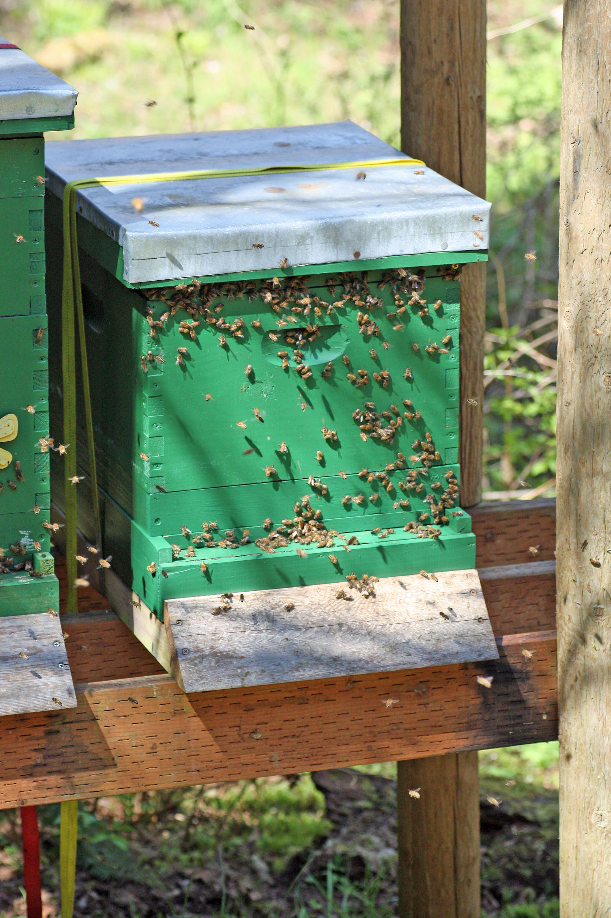 Sun or shade: which is best for the bees? - Honey Bee Suite