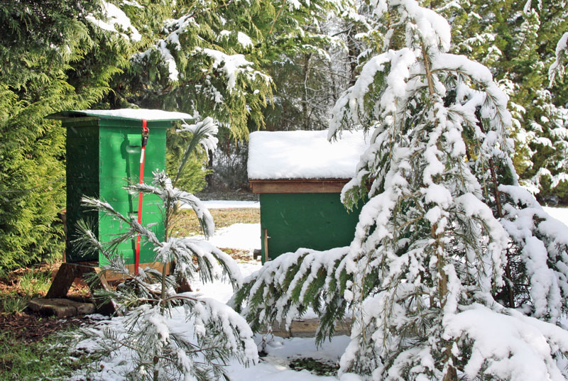 A final sting. Two hives lightly dusted with snow, a green Langstroth hive and a green top-bar hive.