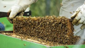 How to checkerboard a hive - Honey Bee Suite