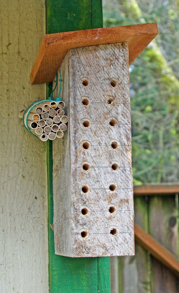 Holes drilled in a bee block with ready-to-hatch straws nearby.