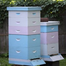 Alveari urbani a Illinois.  Guarda altre foto di api a AlexanderWild.com.