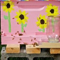 Rosa alveare per AndrewPotterPhoto.com.  Vedi il blog di Shanna a HoneyPotters.