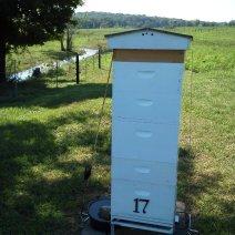 Giù dal torrente.  Herb Lester apiari, Tennessee.